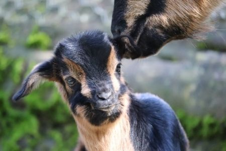 Feed the animals at Staglands Wildlife Reserve - family activities in wellington
