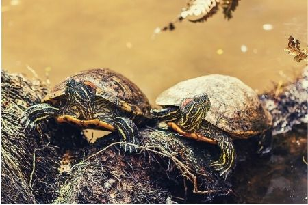 Meet our amazing turtles - family activities in wellington