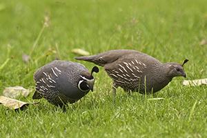 toe-toe-aviary