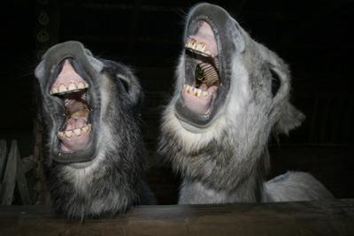 Member Benefits - laughing donkeys