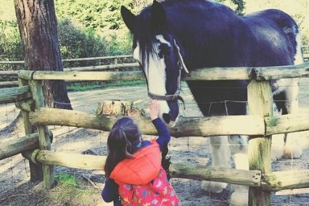 Jock the Clydesdale horse meets a visitor at Staglands Wildlife Reserve