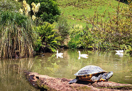 Red Eared Slider Turtles 'Beverly Hills' style accommodation - Staglands Wildlife Reserve