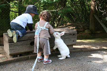 Kids will enjoy the secret garden - great family activities in Wellington