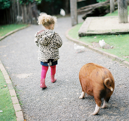 Cute free roaming kune kune piglet, Alice in Wonderland, secret garden Staglands Wildlife Reserve