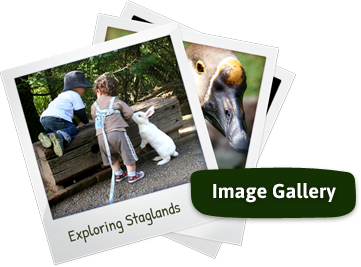 Staglands Image Gallery