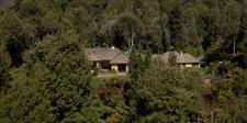 Treetops Lodge nestled in the bush