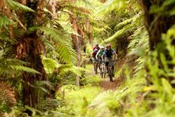 Mountain biking adventures through stunning native Rotorua forest