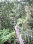 Rotorua Canopy Tour
