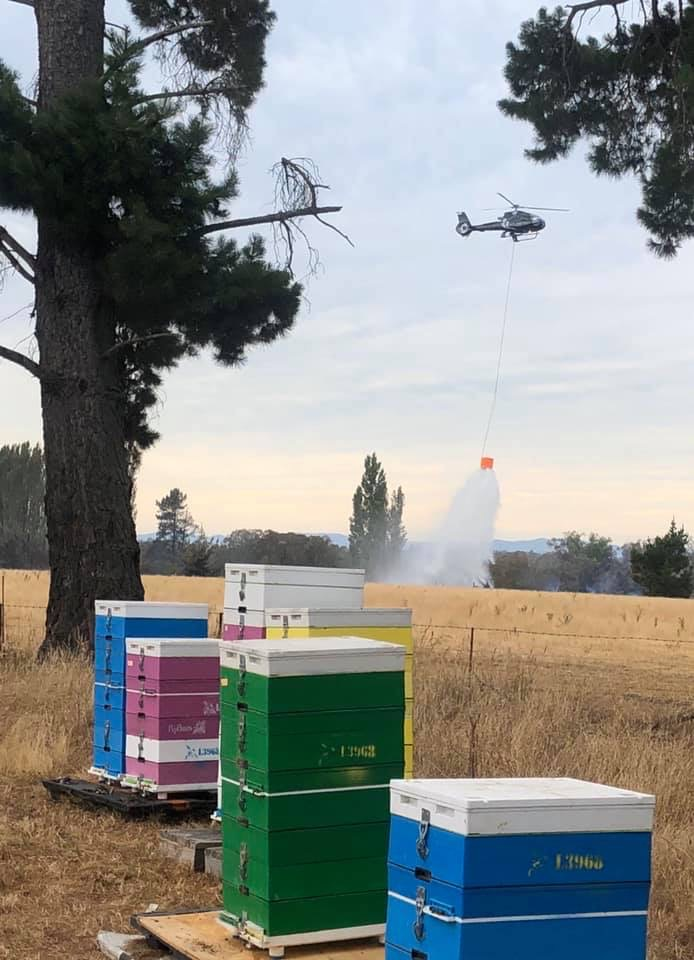 Fire near bee hives