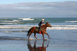 For even more action, try orienteering or paintball, Go horse riding or try out the water slides at Waiwera Hotpools.